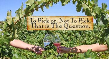 Qu'est-ce que Shakespeare a en commun avec les vignerons modernes ?