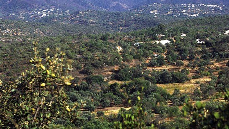 L'Office du Tourisme révèle les secrets de l'Algarve_photo Vasco Célio