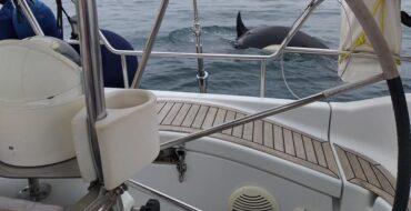 Attaques de nouveaux orques contre des yachts au large des côtes de Lagos et de Sagres
