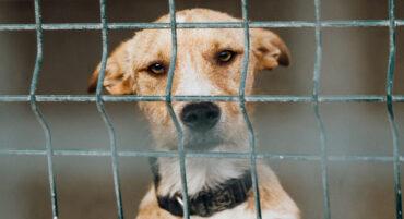 Le ministre lance un appel à tous les refuges pour animaux : « demandez de l'aide car vous ne savez jamais ce qui se passera pendant les incendies de forêt »