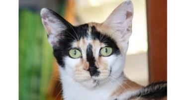 Carvoeiro Cat Charity organise un dîner de collecte de fonds