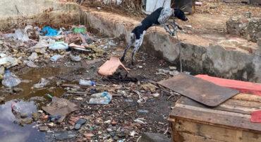 La police sauve neuf chiens vivant dans des « conditions épouvantables » à Portimão
