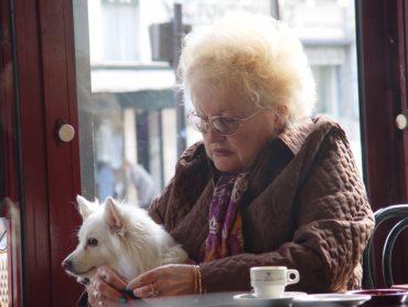 Au Portugal vous pourrez bientôt emmener votre chien au restaurant