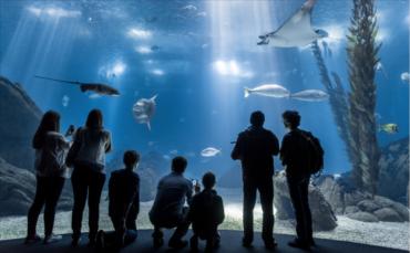L'Océanarium de Lisbonne élu meilleur aquarium du monde
