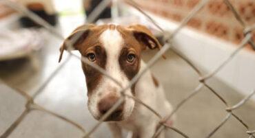 Au moins 11 chiens retrouvés morts dans l'horreur d'un «hôtel canin» abandonné
