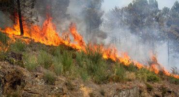 Votre maison survivrait-elle à un incendie rural ?
