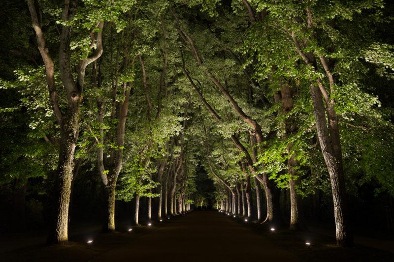 ha_luz_no_parque